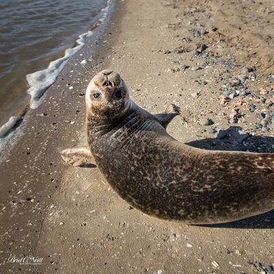 Seal Pic 5 - Square