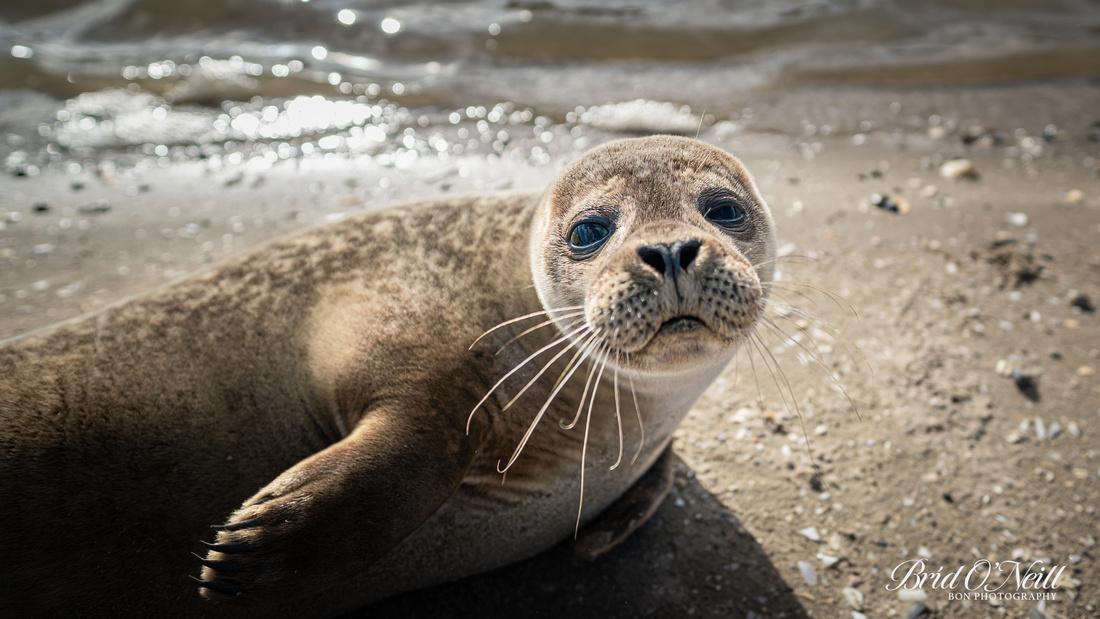 Seal Pic 7 - 16:9
